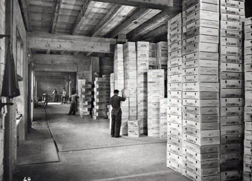 Maraschino liqueur: Luxardo factory, Zara, detail 04 (crt-01)