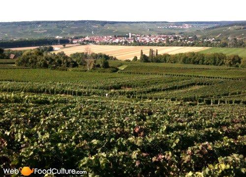 Champagne wine: Champagne landscape (1)