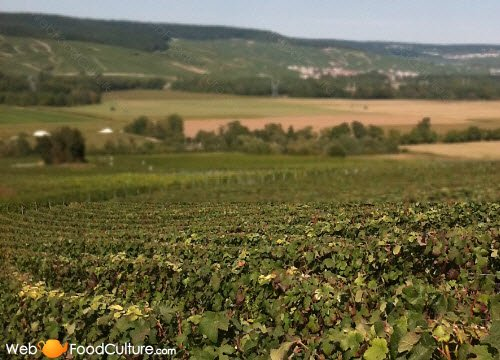 Champagne wine: Champagne landscape (2)