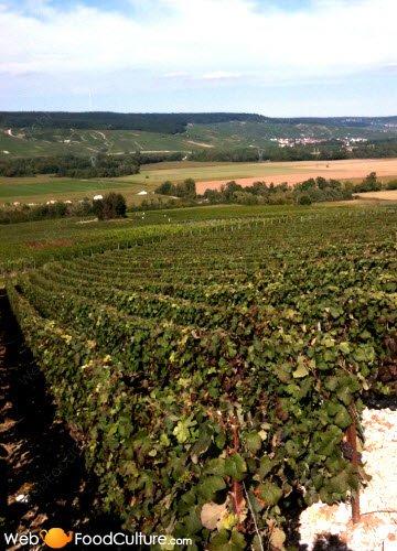 Champagne wine: Champagne landscape (5)