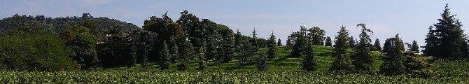 Ballotta, Galileo's Trattoria: Torreglia, panorama.
