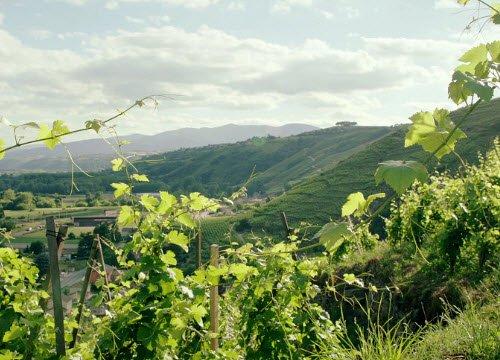 Wine Masters: Il verde dei filari (crt-01)