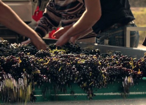Wine Masters: Il porpora dell'uva (crt-01)