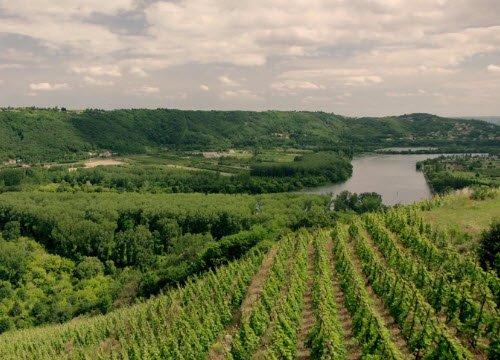 Wine Masters: Vigne sulle rive del Reno (crt-01)