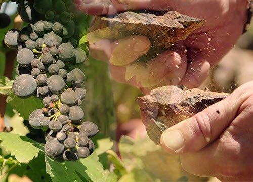 Wine Masters: Uva e Terra (crt-01)