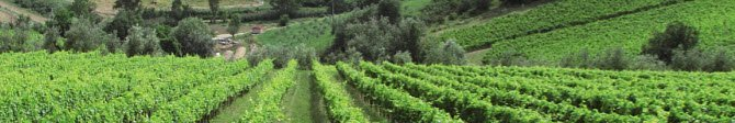 Leonardo da Vinci and wine: Vineyards of the Romagna hills (crt-01)