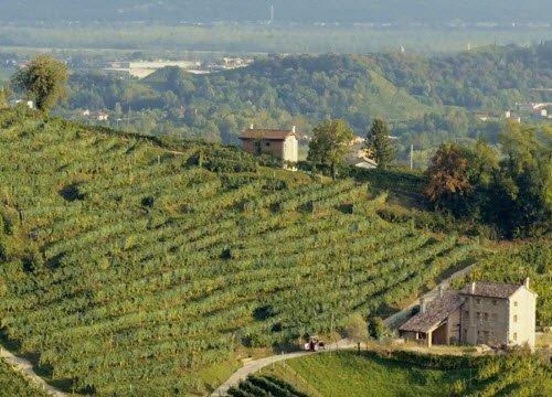 Prosecco wine: Conegliano-Valdobbiadene DOCG.