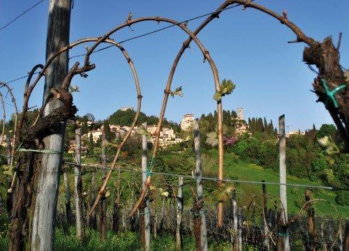 Prosecco wine: Asolo Prosecco Superiore DOCG - Landscapes 01 (crt-02)