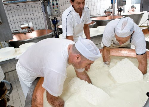 Asiago Cheese: The curd is extracted by hand (crt-01)