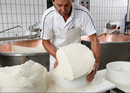 Asiago Cheese: The curd is placed in the molds (crt-01)