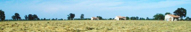 The pastures of Parmigiano Reggiano (crt-01)