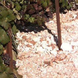 Champagne wine: a soil rich in chalk.