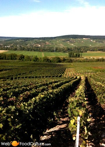 Champagne wine: vineyards.