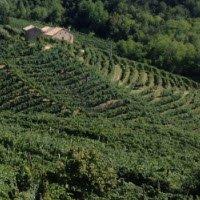 Prosecco wine: The 'terraces' of the Prosecco Superiore DOCG.