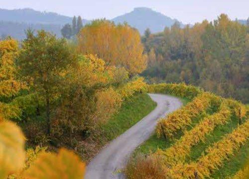 Prosecco wine: Prosecco road in Asolo (img-22)