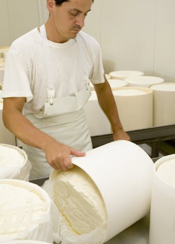 Gorgonzola PDO: the curd in the molds (crt-01)