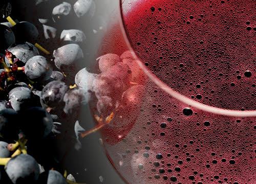 Lambrusco wine: the Lambrusco vines. (crt-01)