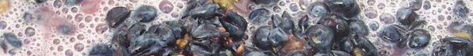 Brunello di Montalcino: la fermentazione (cc-02)
