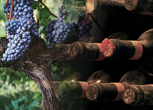 Brunello di Montalcino: dalla vigna alla cantina (crt-01; crt-02)